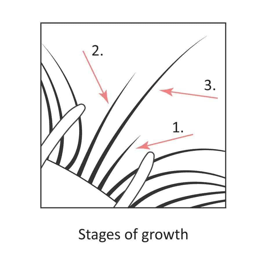 Natural lashes showed during the 3 stages of growth.